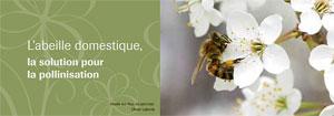abeille-pollinisatrice