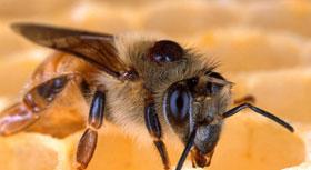 silence-des-abeilles