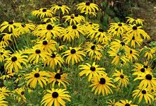 plantes mellifères – qrs | au bon miel