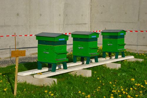 13-04-25-installation-ruches-1