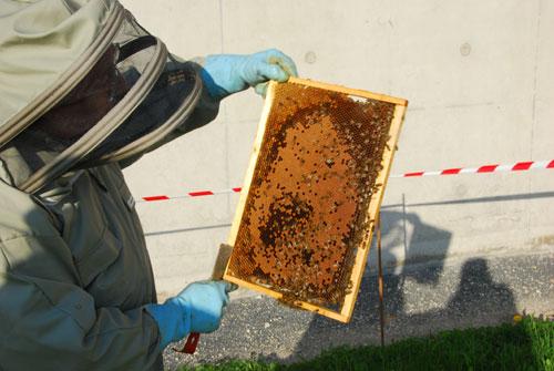 13-04-25-installation-ruches-2