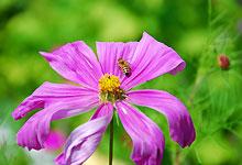 fleur-butinee