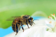 2015-02-02-abeille-techno