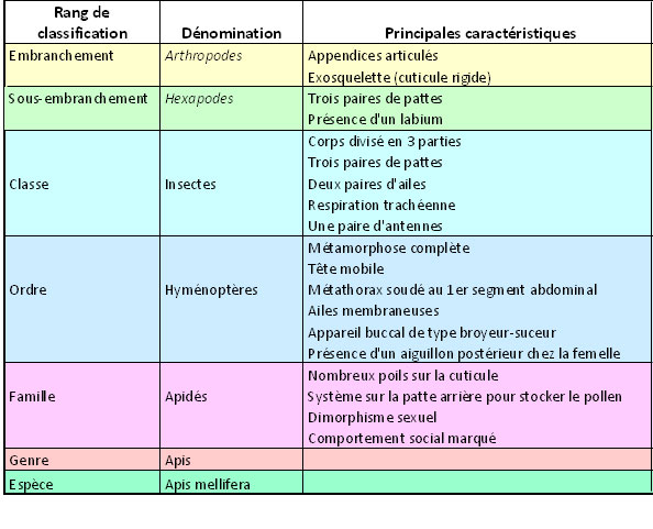 classification-apis-mellifera