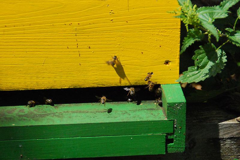 2015-07-ruche2