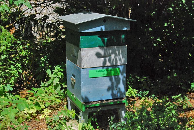 ruches-juillet-2015-1