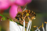 mes-abeilles-tn