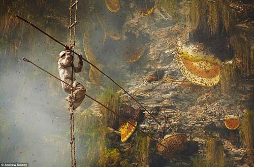 abeilles-himalaya-1