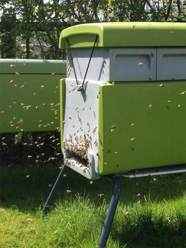 bee-house2