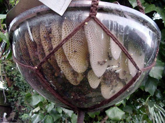 bubble-hive3