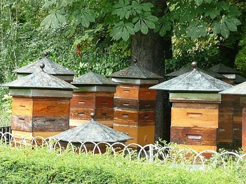 rucher-jardins-luxembourg-2